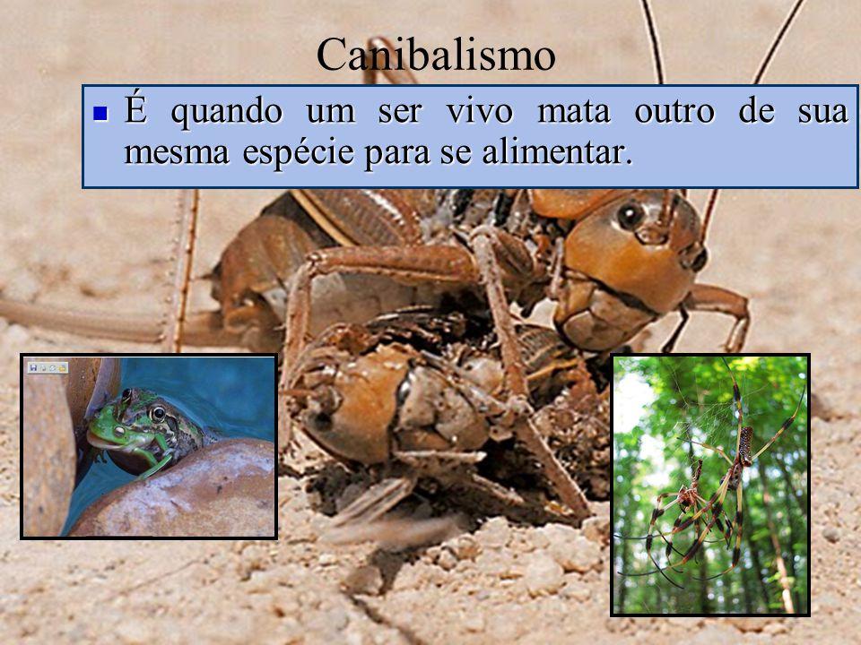 Canibalismo É quando um ser vivo mata outro de sua mesma espécie para se alimentar. É quando um ser vivo mata outro de sua mesma espécie para se alime