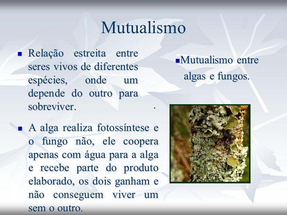 Mutualismo Relação estreita entre seres vivos de diferentes espécies, onde um depende do outro para sobreviver. Relação estreita entre seres vivos de