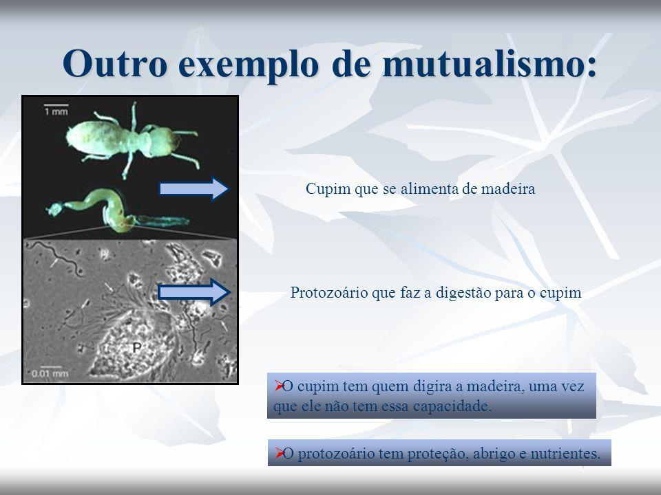 Outro exemplo de mutualismo: Cupim que se alimenta de madeira Protozoário que faz a digestão para o cupim  O cupim tem quem digira a madeira, uma vez