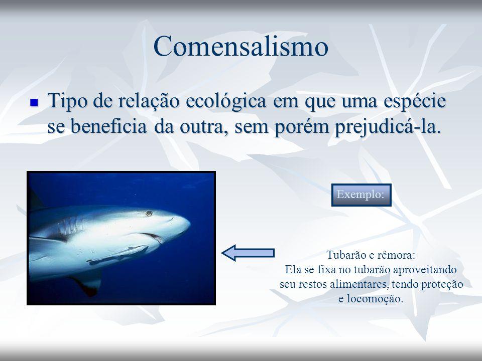 Comensalismo Tipo de relação ecológica em que uma espécie se beneficia da outra, sem porém prejudicá-la. Tipo de relação ecológica em que uma espécie