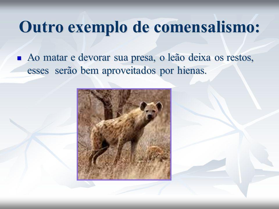 Outro exemplo de comensalismo: Ao matar e devorar sua presa, o leão deixa os restos, esses serão bem aproveitados por hienas. Ao matar e devorar sua p