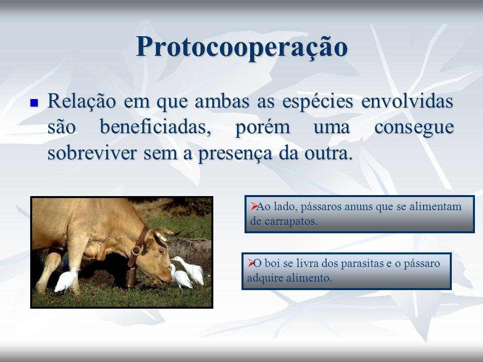 Protocooperação Relação em que ambas as espécies envolvidas são beneficiadas, porém uma consegue sobreviver sem a presença da outra. Relação em que am