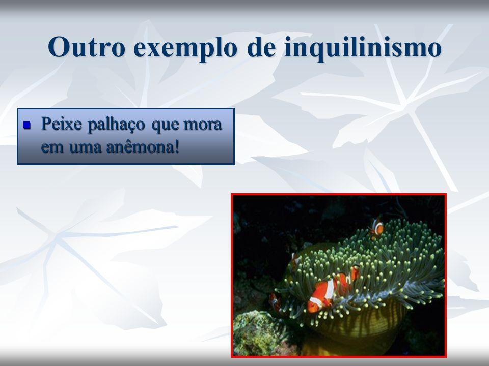 Outro exemplo de inquilinismo Peixe palhaço que mora em uma anêmona! Peixe palhaço que mora em uma anêmona!