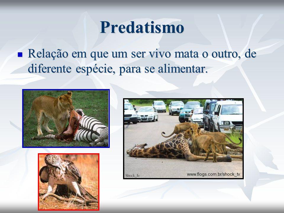 Predatismo Relação em que um ser vivo mata o outro, de diferente espécie, para se alimentar. Relação em que um ser vivo mata o outro, de diferente esp