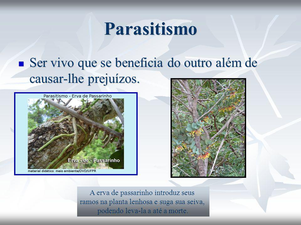 Parasitismo Ser vivo que se beneficia do outro além de causar-lhe prejuízos. Ser vivo que se beneficia do outro além de causar-lhe prejuízos. A erva d