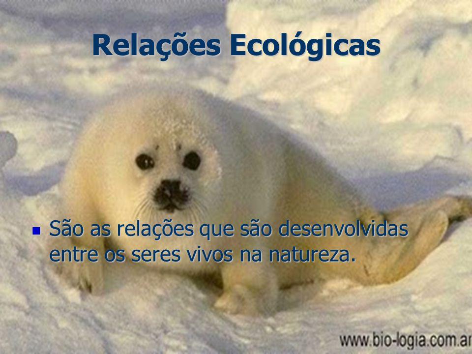 Relações Ecológicas São as relações que são desenvolvidas entre os seres vivos na natureza. São as relações que são desenvolvidas entre os seres vivos