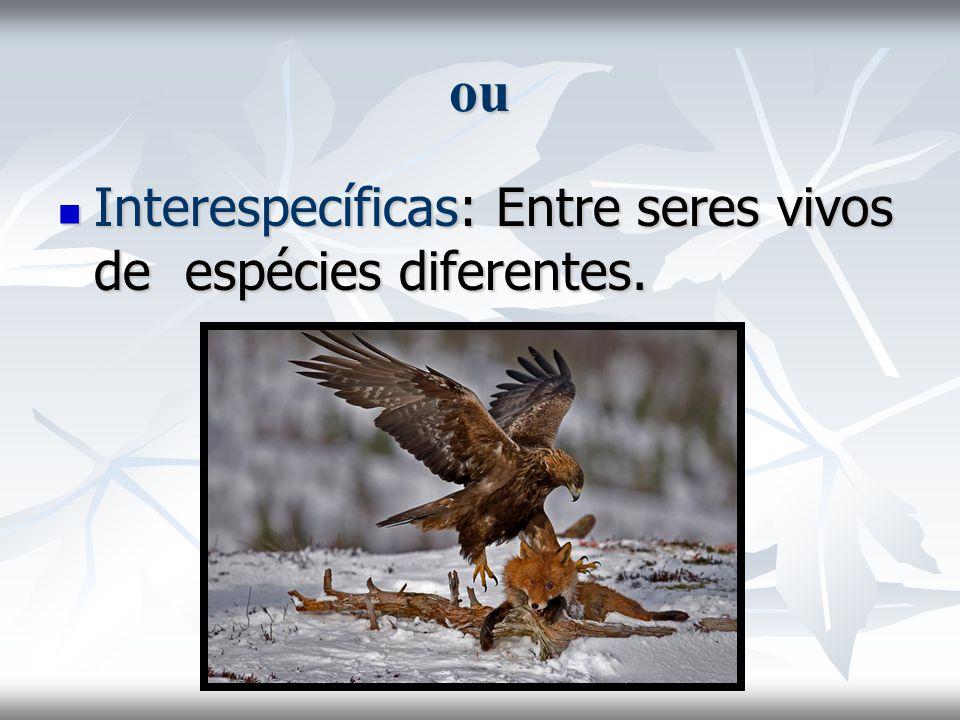 ou Interespecíficas: Entre seres vivos de espécies diferentes. Interespecíficas: Entre seres vivos de espécies diferentes.