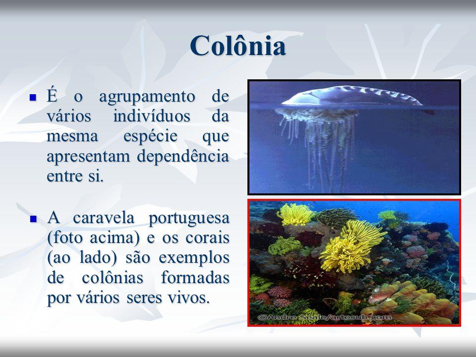 Colônia É o agrupamento de vários indivíduos da mesma espécie que apresentam dependência entre si. É o agrupamento de vários indivíduos da mesma espéc