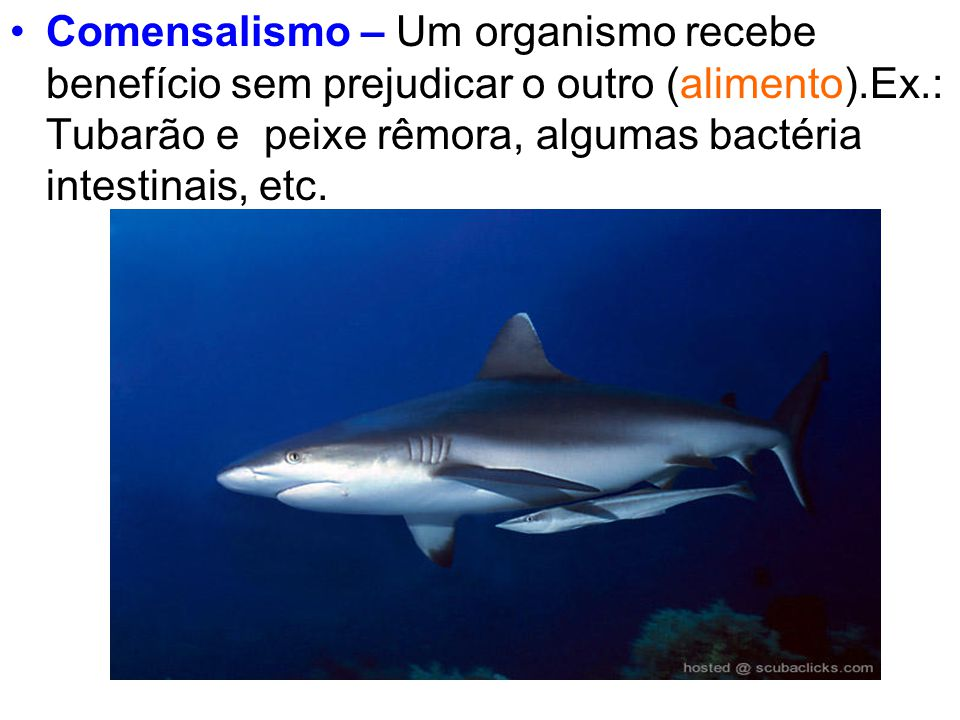 Comensalismo – Um organismo recebe benefício sem prejudicar o outro (alimento).Ex.: Tubarão e peixe rêmora, algumas bactéria intestinais, etc.