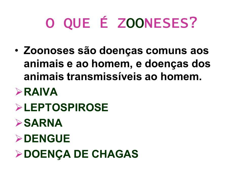 O QUE É ZOONESES? Zoonoses são doenças comuns aos animais e ao homem, e doenças dos animais transmissíveis ao homem.  RAIVA  LEPTOSPIROSE  SARNA 