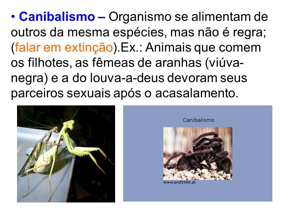 Canibalismo – Organismo se alimentam de outros da mesma espécies, mas não é regra; (falar em extinção).Ex.: Animais que comem os filhotes, as fêmeas d