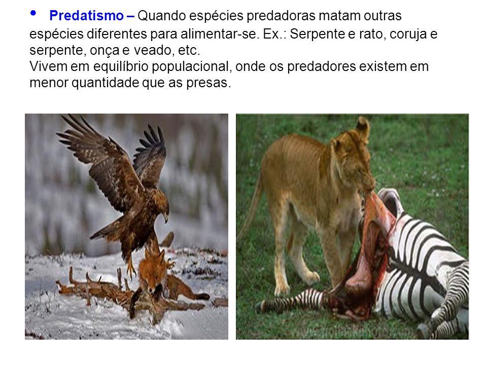 Predatismo – Quando espécies predadoras matam outras espécies diferentes para alimentar-se. Ex.: Serpente e rato, coruja e serpente, onça e veado, etc