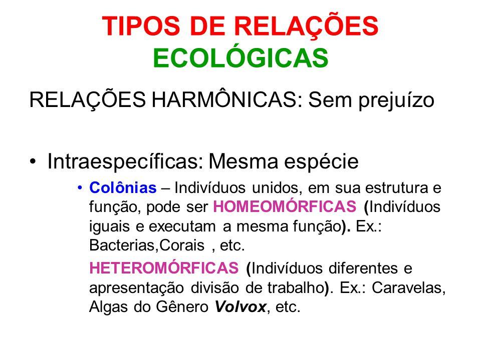 TIPOS DE RELAÇÕES ECOLÓGICAS RELAÇÕES HARMÔNICAS: Sem prejuízo Intraespecíficas: Mesma espécie Colônias – Indivíduos unidos, em sua estrutura e função