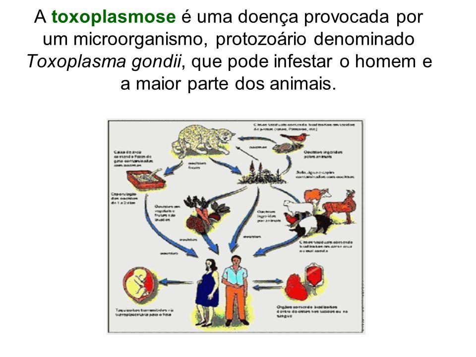 A toxoplasmose é uma doença provocada por um microorganismo, protozoário denominado Toxoplasma gondii, que pode infestar o homem e a maior parte dos a