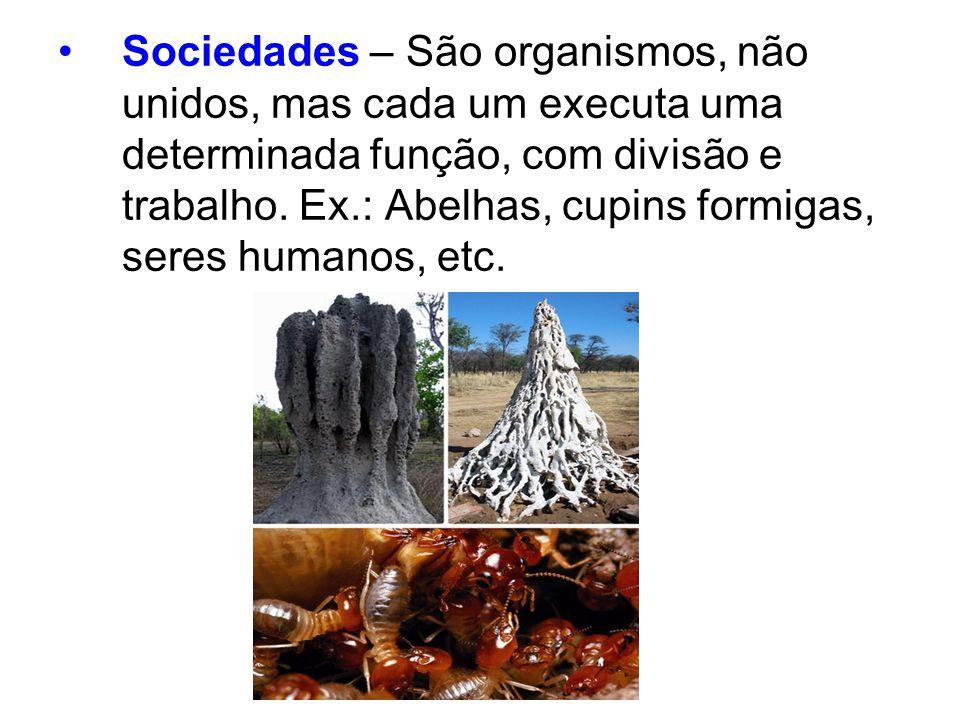 Sociedades – São organismos, não unidos, mas cada um executa uma determinada função, com divisão e trabalho. Ex.: Abelhas, cupins formigas, seres huma