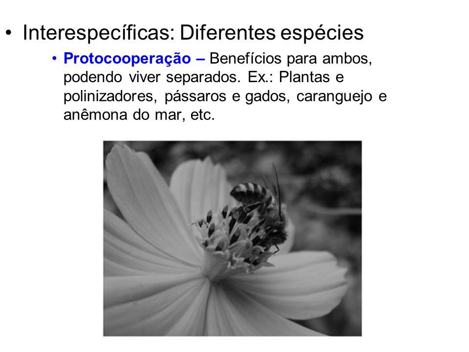 Interespecíficas: Diferentes espécies Protocooperação – Benefícios para ambos, podendo viver separados. Ex.: Plantas e polinizadores, pássaros e gados