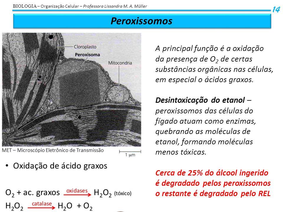 Peroxissomos 14 BIOLOGIA – Organização Celular – Professora Lissandra M. A. Müller A principal função é a oxidação da presença de O 2 de certas substâ