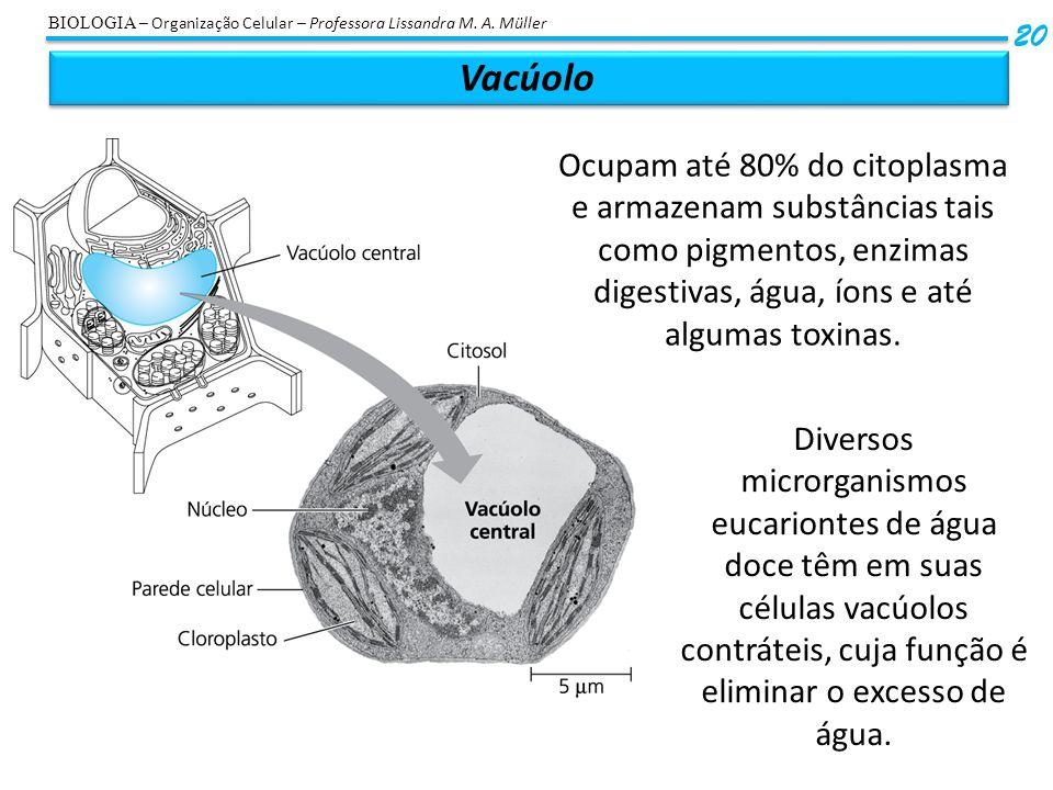 Vacúolo 20 BIOLOGIA – Organização Celular – Professora Lissandra M. A. Müller Ocupam até 80% do citoplasma e armazenam substâncias tais como pigmentos