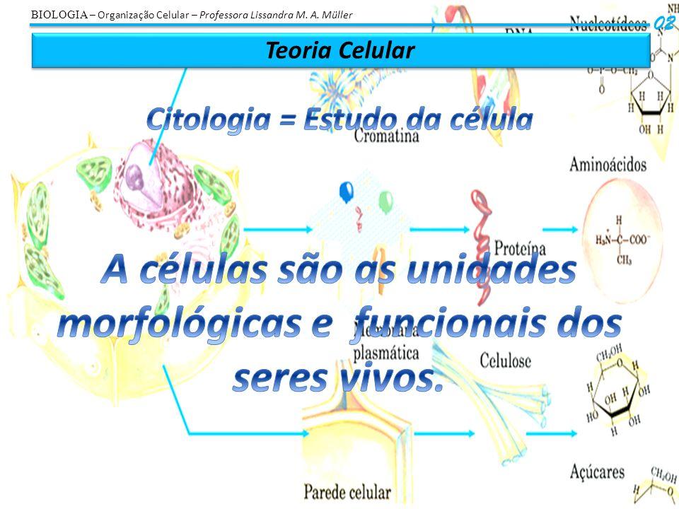 Tipos de Células 03 Célula EucarióticaAnimalVegetalProcariótica BIOLOGIA – Organização Celular – Professora Lissandra M.