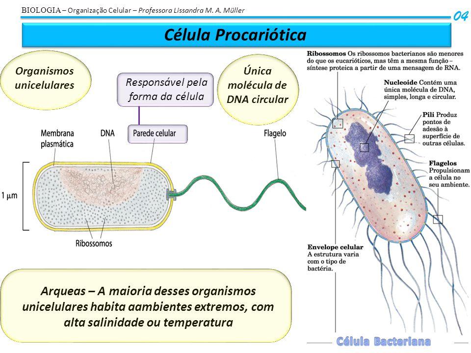 Célula Procariótica 04 Organismos unicelulares Única molécula de DNA circular Arqueas – A maioria desses organismos unicelulares habita aambientes ext