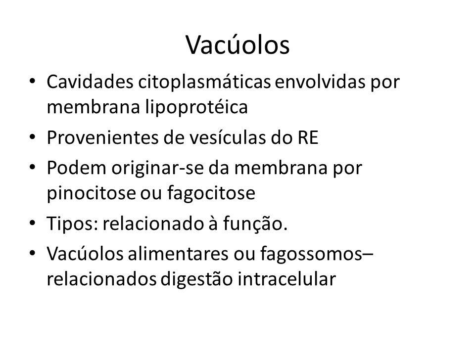 Vacúolos Cavidades citoplasmáticas envolvidas por membrana lipoprotéica Provenientes de vesículas do RE Podem originar-se da membrana por pinocitose o