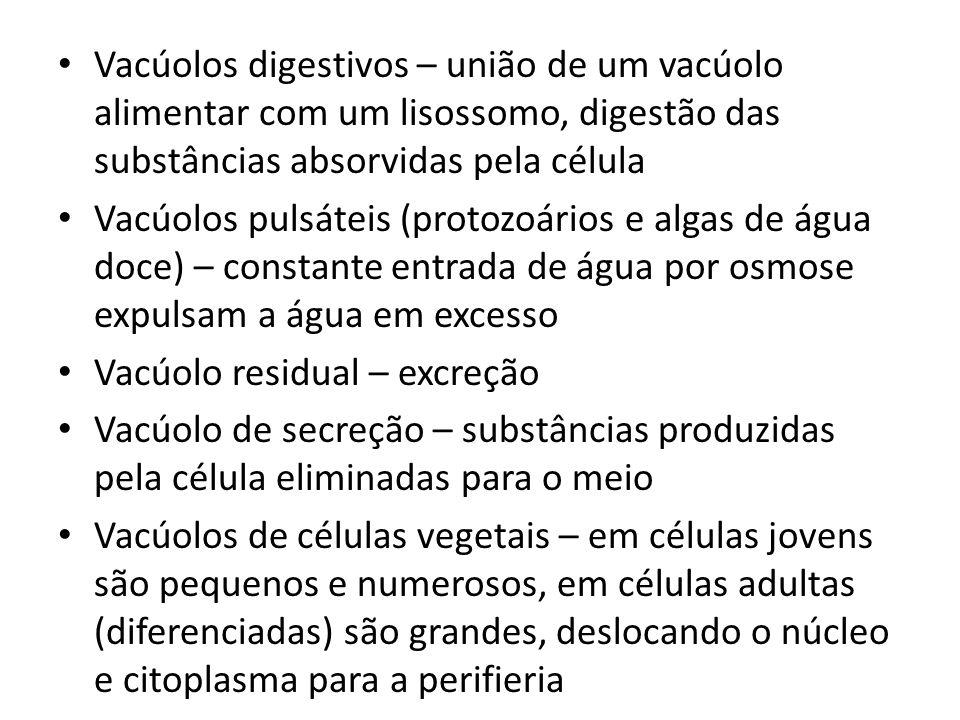 Vacúolos digestivos – união de um vacúolo alimentar com um lisossomo, digestão das substâncias absorvidas pela célula Vacúolos pulsáteis (protozoários