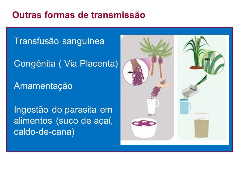 Transfusão sanguínea Outras formas de transmissão Congênita ( Via Placenta) Amamentação Ingestão do parasita em alimentos (suco de açaí, caldo-de-cana