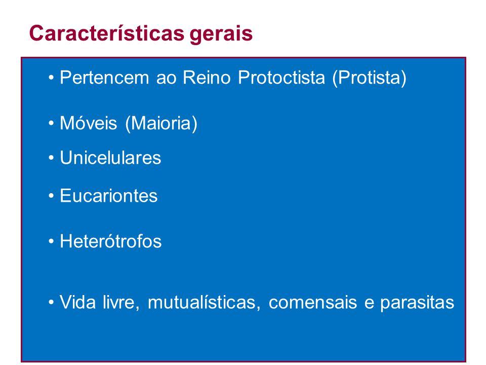 Pertencem ao Reino Protoctista (Protista) Móveis (Maioria) Unicelulares Eucariontes Heterótrofos Vida livre, mutualísticas, comensais e parasitas Cara