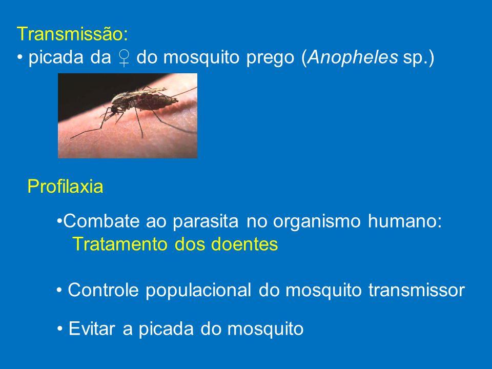 Profilaxia Combate ao parasita no organismo humano: Tratamento dos doentes Controle populacional do mosquito transmissor Evitar a picada do mosquito T