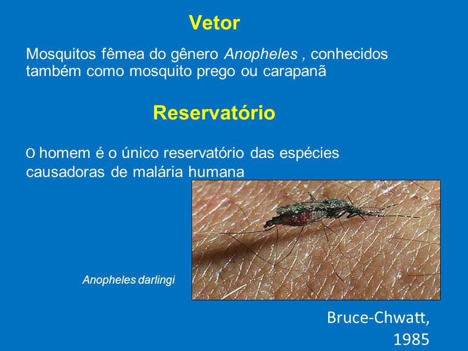 Vetor Mosquitos fêmea do gênero Anopheles, conhecidos também como mosquito prego ou carapanã Reservatório O homem é o único reservatório das espécies