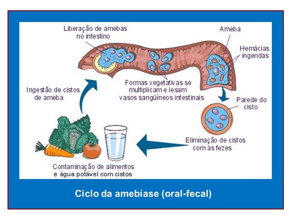 Ciclo da amebíase (oral-fecal)
