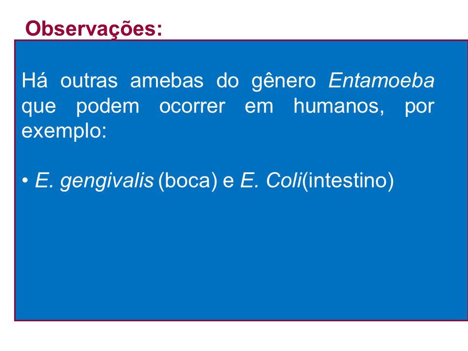 Há outras amebas do gênero Entamoeba que podem ocorrer em humanos, por exemplo: E. gengivalis (boca) e E. Coli(intestino) Observações: