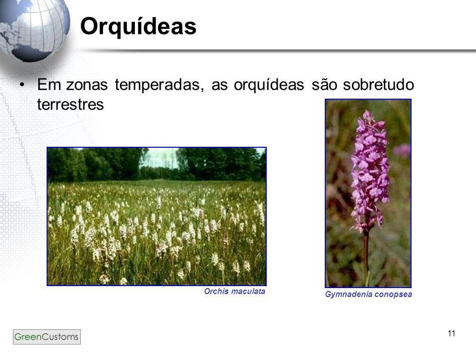 11 Orquídeas Em zonas temperadas, as orquídeas são sobretudo terrestres. Orchis maculata Gymnadenia conopsea