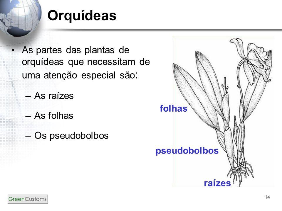 14 Orquídeas As partes das plantas de orquídeas que necessitam de uma atenção especial são : –As raízes –As folhas –Os pseudobolbos raízes pseudobolbo