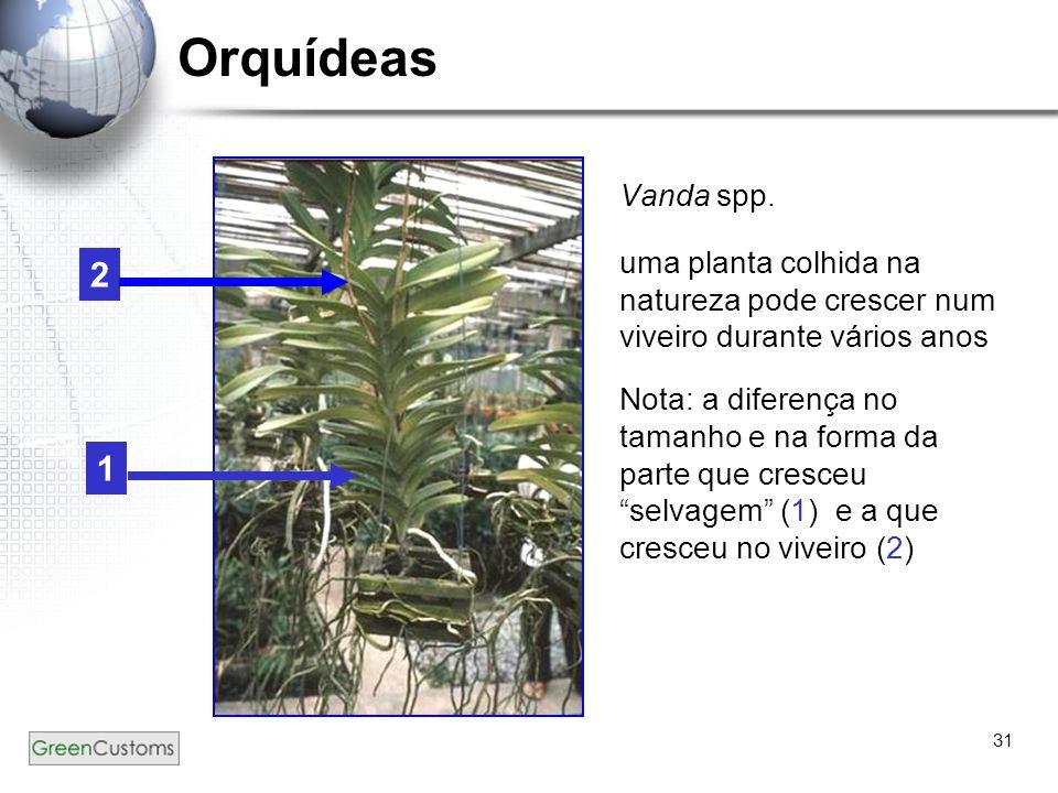 31 Orquídeas Vanda spp. uma planta colhida na natureza pode crescer num viveiro durante vários anos Nota: a diferença no tamanho e na forma da parte q