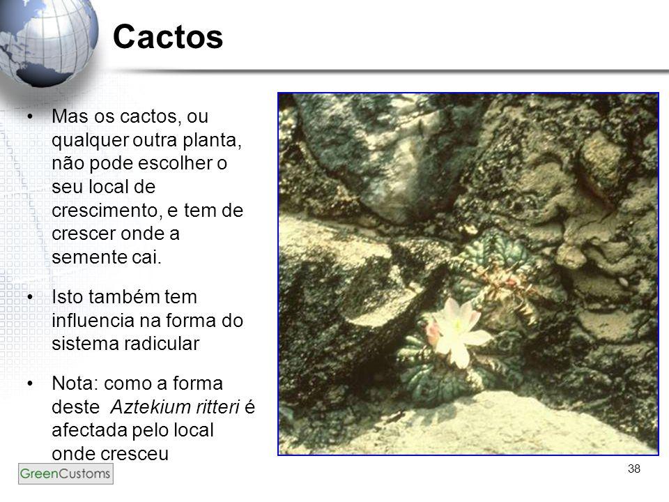 38 Cactos Mas os cactos, ou qualquer outra planta, não pode escolher o seu local de crescimento, e tem de crescer onde a semente cai. Isto também tem