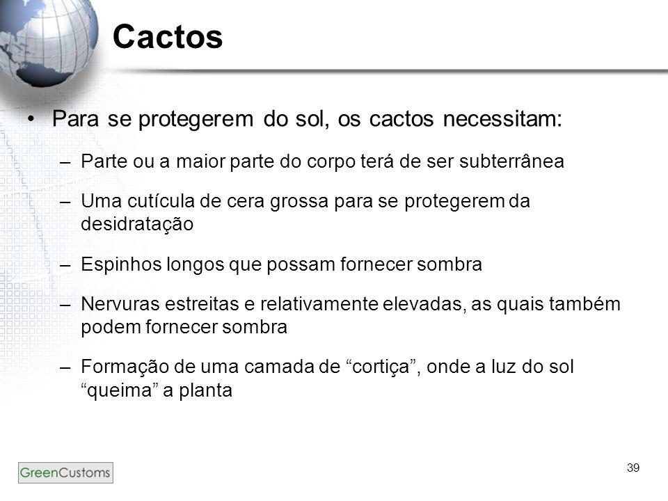 39 Cactos Para se protegerem do sol, os cactos necessitam: –Parte ou a maior parte do corpo terá de ser subterrânea –Uma cutícula de cera grossa para