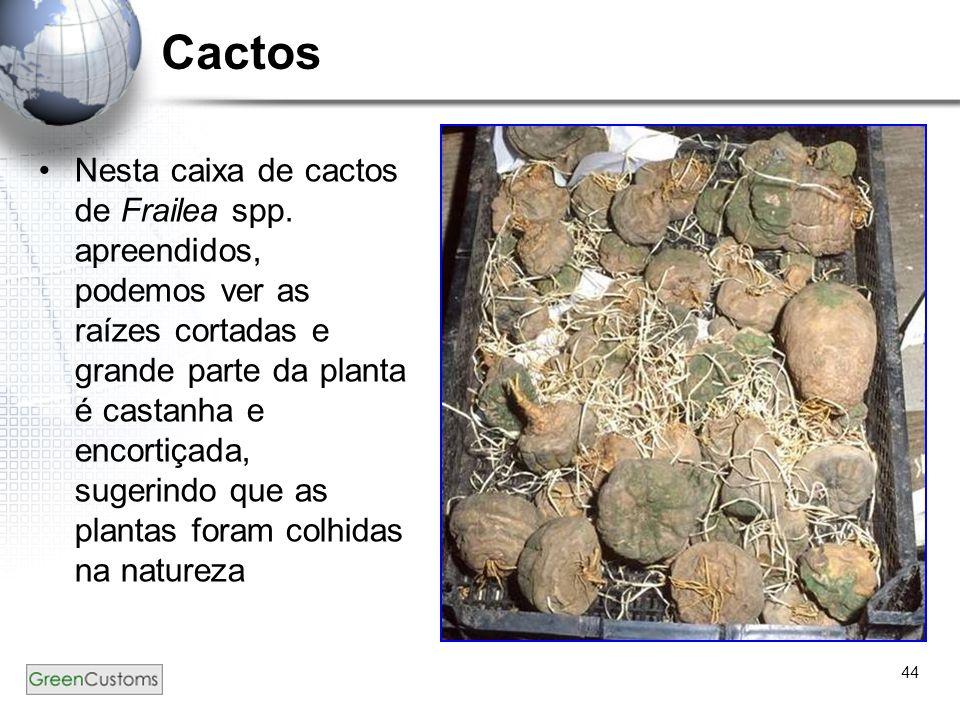 44 Cactos Nesta caixa de cactos de Frailea spp. apreendidos, podemos ver as raízes cortadas e grande parte da planta é castanha e encortiçada, sugerin
