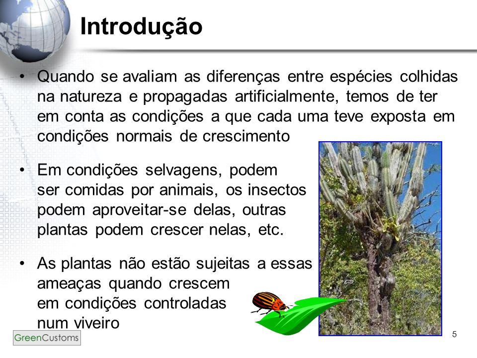 5 Introdução Quando se avaliam as diferenças entre espécies colhidas na natureza e propagadas artificialmente, temos de ter em conta as condições a qu