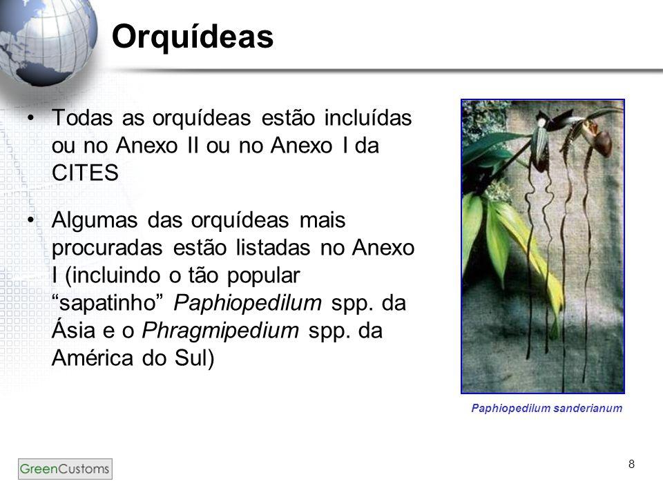 8 Orquídeas Todas as orquídeas estão incluídas ou no Anexo II ou no Anexo I da CITES Algumas das orquídeas mais procuradas estão listadas no Anexo I (