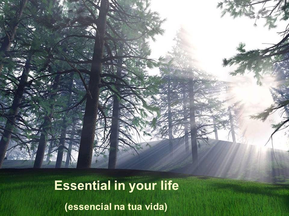 Essential in your life (essencial na tua vida)