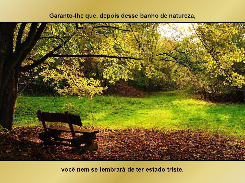"""Experimente. Da próxima vez em que se sentir """"para baixo"""" vá para um parque, abrace uma árvore, puxe assunto com alguém sentado sozinho em um banco (o"""
