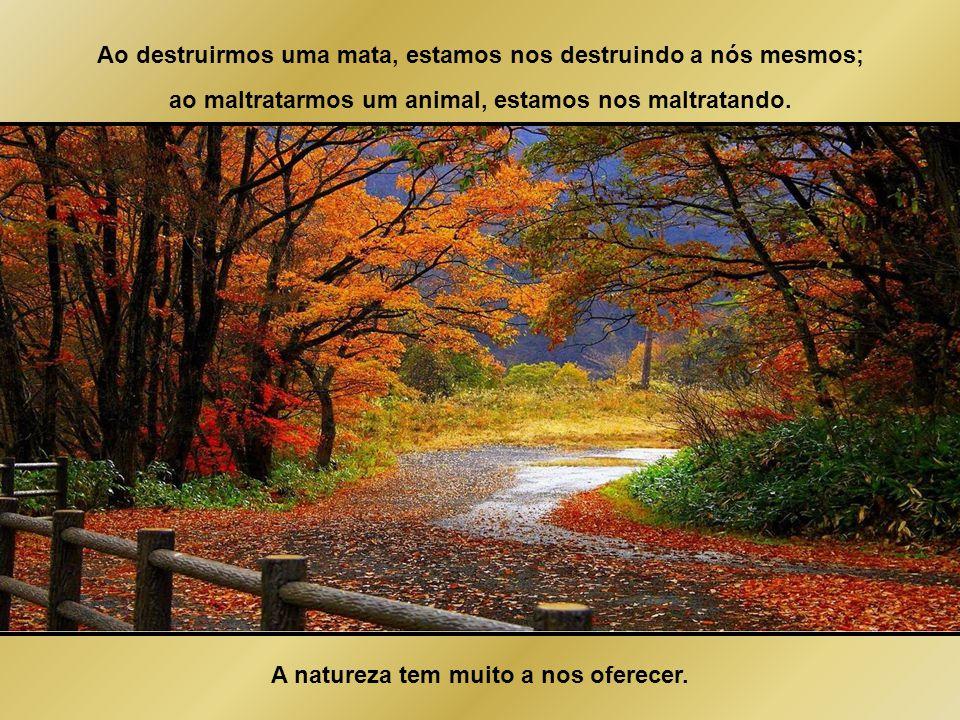 A natureza é o retrato fiel de nós mesmos. O que vemos de errado na natureza é o que vemos de errado em nós mesmos.