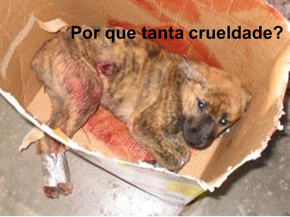 Por que tanta crueldade?