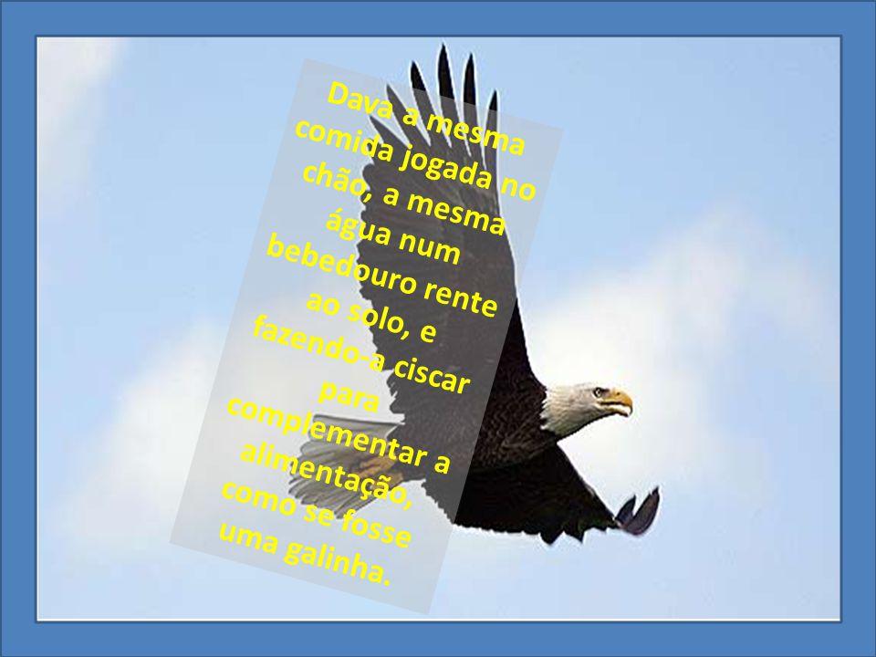 E a águia passou a se portar como se galinha fosse.