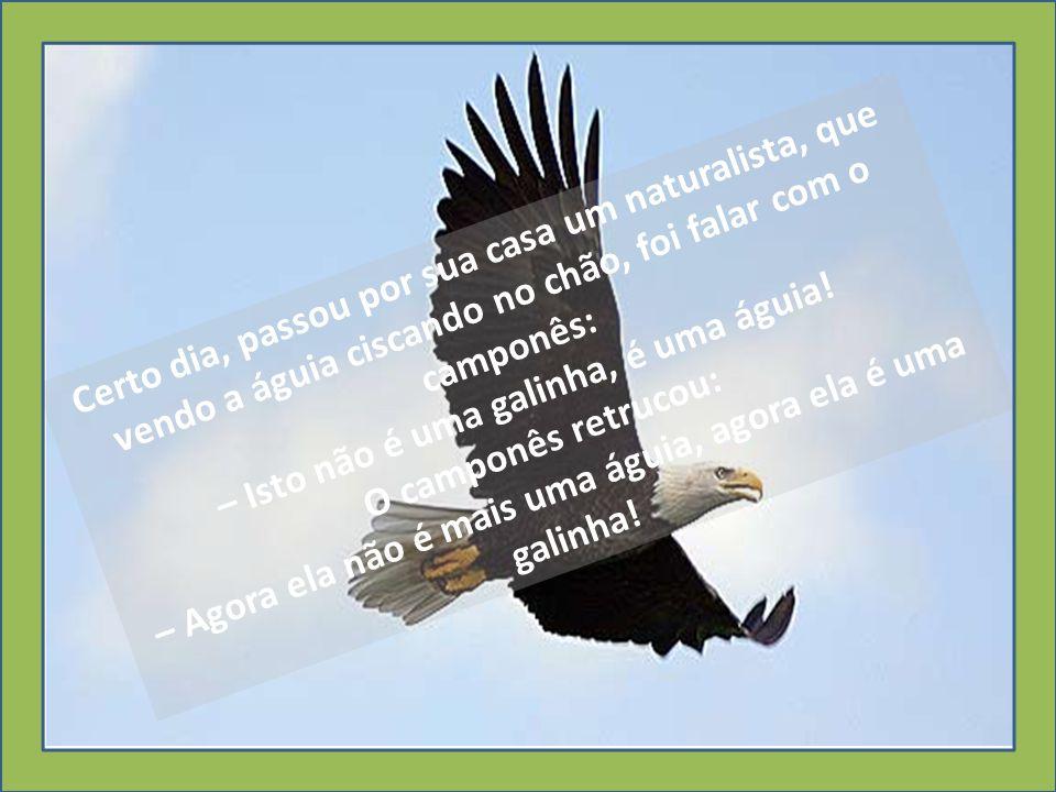Certo dia, passou por sua casa um naturalista, que vendo a águia ciscando no chão, foi falar com o camponês: – Isto não é uma galinha, é uma águia.