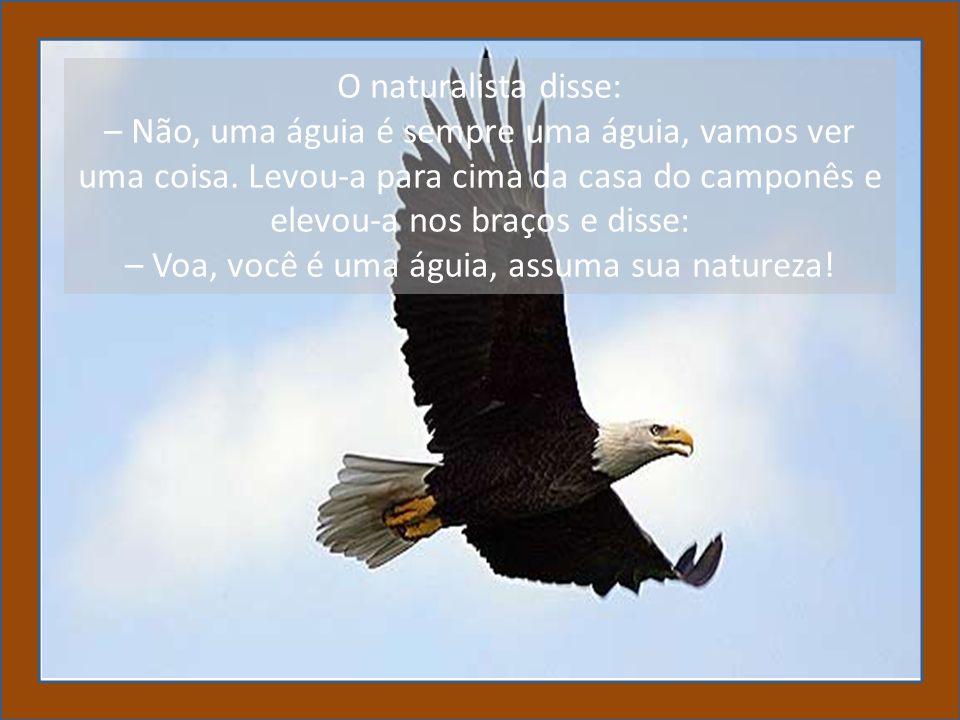 O naturalista disse: – Não, uma águia é sempre uma águia, vamos ver uma coisa.