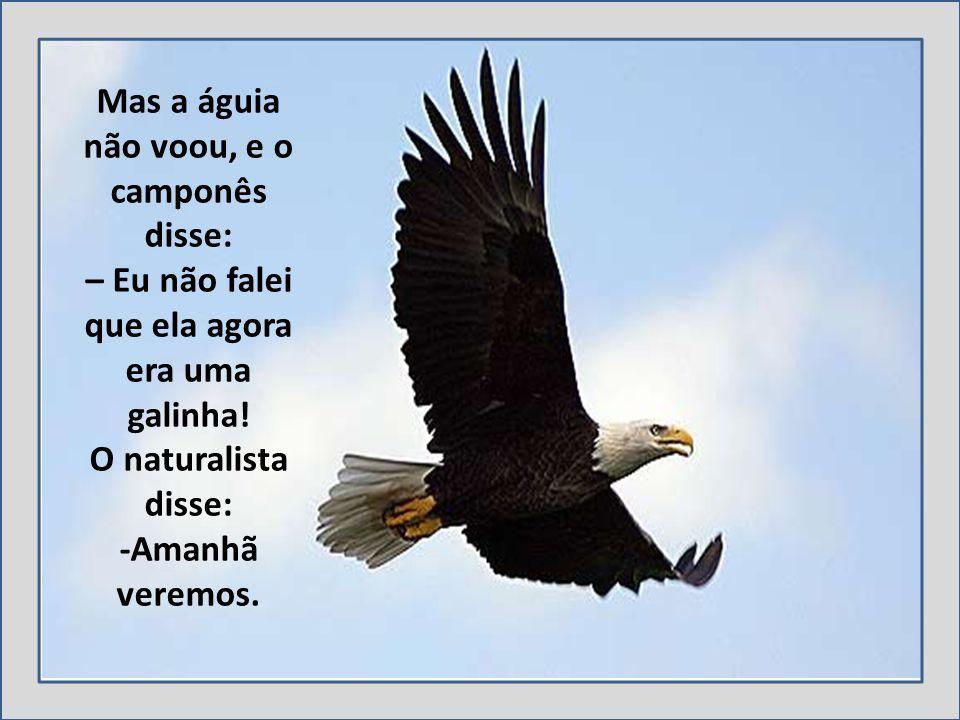 Mas a águia não voou, e o camponês disse: – Eu não falei que ela agora era uma galinha.