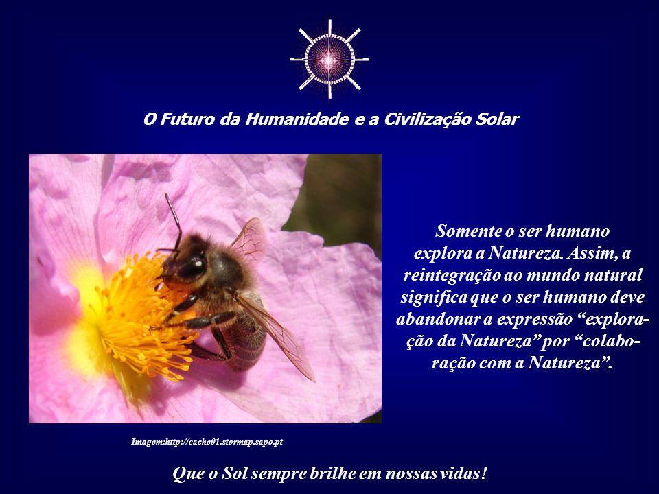 ☼ O Futuro da Humanidade e a Civilização Solar Que o Sol sempre brilhe em nossas vidas! Pois, se o passado é uma sólida referência, como as raízes de