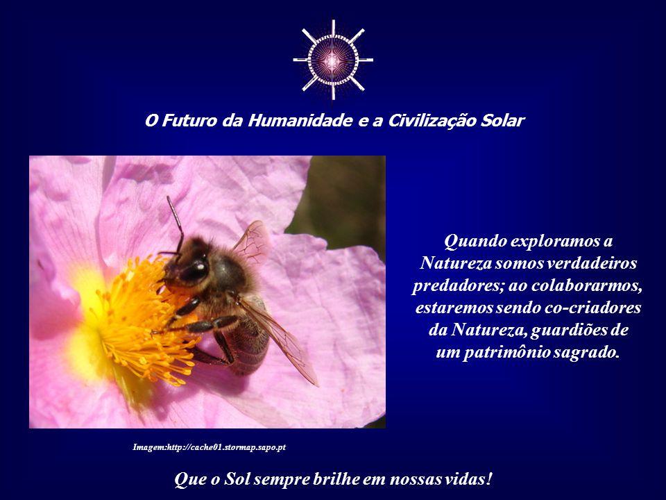 ☼ O Futuro da Humanidade e a Civilização Solar Que o Sol sempre brilhe em nossas vidas! Somente o ser humano explora a Natureza. Assim, a reintegração